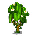 exotic tree with creeping leaves and flowers vector image