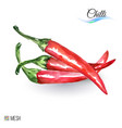 watercolor chilli on white background cute is vector image