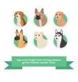 Dogs flat icons set with french bulldog cockapoo vector image