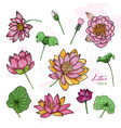 set of lotus flower in different views bloomed vector image
