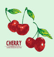 digital detailed color cherry hand drawn vector image