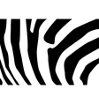 Zebra fur pattern vector image