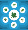 flat icon natural set of alder hickory acacia vector image