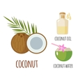 Superfood coconut set in flat style vector image