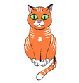 cartoon image of cat vector image