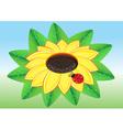 ladybug on yellow sunflower vector image