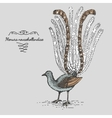 Lyrebird engraved hand drawn vector image
