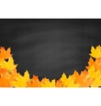 Autumn blackboard background with realistic maple vector image vector image