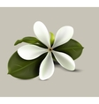 SPA flower vector image
