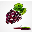 Grapes fruit vector image