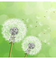 Green background with flowers dandelions vector image vector image