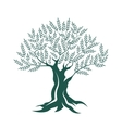 Olive tree silhouette icon on white background vector image vector image