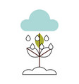 cultivated plant isolated icon vector image