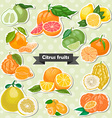 Set of isolated label citrus fruits vector image