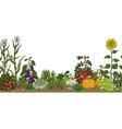 vegetable garden bed vector image
