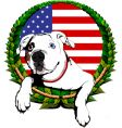 American bulldog with American flag vector image vector image