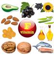 vitamin F content plant vector image