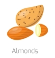 Pile of nuts almonds vector image