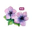 Watercolor elegant flower of japanese sakura vector image