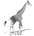 African Giraffe BW vector image vector image