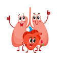 funny smiling human lungs and heart characters vector image
