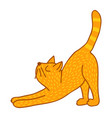 stretching cat vector image