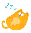 fluffy sleeping sweet dream cat xa vector image