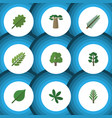 flat icon bio set of spruce leaves forest vector image