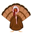 Funny turkeys vector image