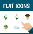 flat icon nature set of tree floral champignon vector image