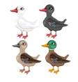 Four cartoon duck in different colors vector image