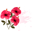 Three pink flowers background vector image vector image