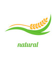 wheat logo template icon design vector image