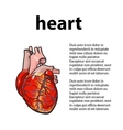 anatomical human heart vector image