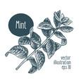 mint branch for design menu vector image