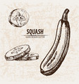 digital detailed line art squash vector image