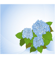 Background with hydrangea vector image