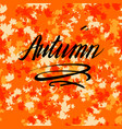 autumn lettering with leaves vector image