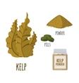 Superfood kelp set in flat style vector image