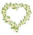 Daisy Flowers in Form Heart Isolated on White vector image