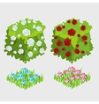 Two bushes of white and red roses flower beds vector image