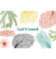 marine plants seaweed background vegetable life vector image