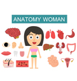 Anatomy Body Woman vector image