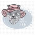 pets fashion look vector image