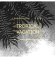 Summer tropical background of palm leaves and vector image