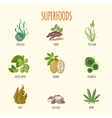 Set of superfoods in flat style vector image