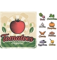Poster With Vegetables In Retro Style vector image