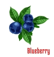 Blueberry fruits botanical icon vector image