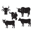 cow bull and calf vector image