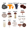flat style set of mushrooms vector image